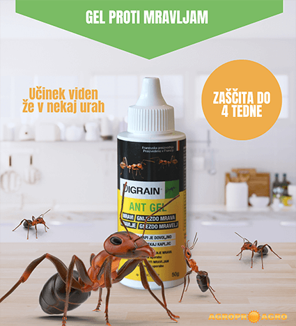 Insekticid Diagrin Ant Gel učinkovita vaba proti mravljam